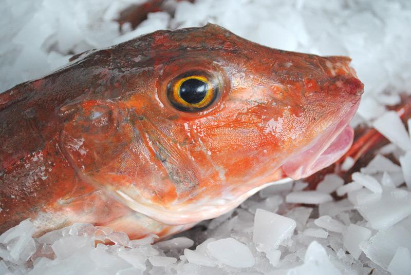 seafood-fest007