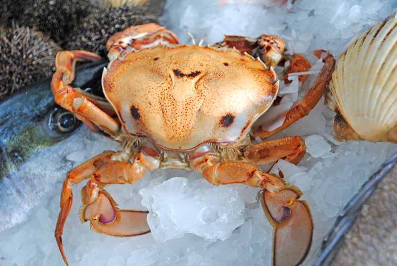 seafood-fest008