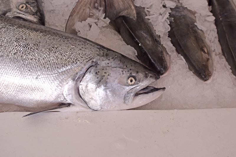 seafood-fest012