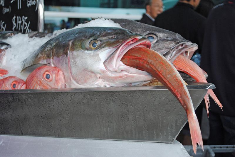 seafood-fest013